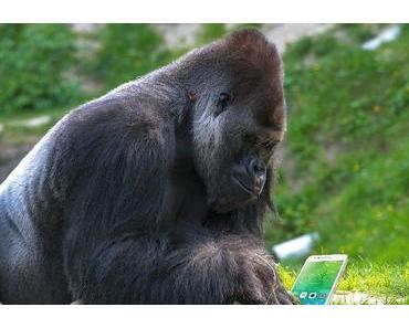 Gorilla-Glas 6 übersteht 15 Abstürze