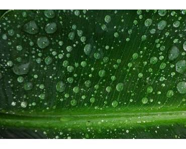 Foto: Endlich Regen!