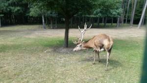Wild- Freizeitpark Höllohe Erlebnis große kleine Entdecker