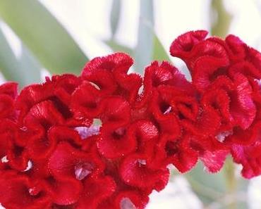 Friday-Flowerday 33/18