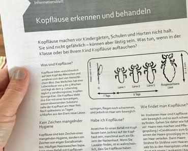 Und täglich grüsst das Murmeltier: Die Läuse-Info nach den Schulferien