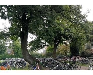 Foto: Natur und Technik vor dem Schloss Westerholt