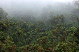 Amistad Nationalpark Nebelwald zwischen Panama Costa Rica