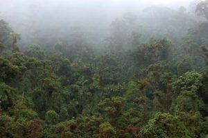 La Amistad Nationalpark – Nebelwald zwischen Panama und Costa Rica