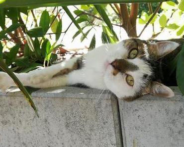 World Animal Day – aus Liebe zum Tier