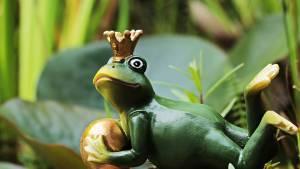 Schlange Froschkönig