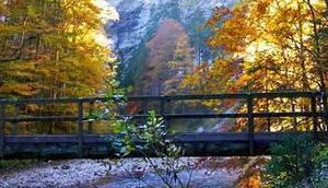Bild Woche: Goldener Herbst