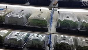 Mallorcas größte Marihuana-Lieferanten verhaftet