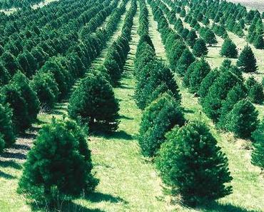 Nachhaltiger Weihnachtsbaum: Biotanne oder Weihnachtsbaum aus Holz?