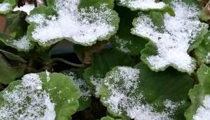 Foto: zweite Schnee Saison Advent