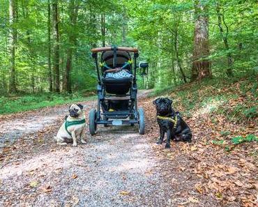 Sarah, Maja und Max – Wandern mit Möpsen