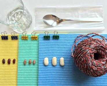Bohnen keimen lassen: Projekt für kleine Naturforscher