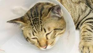 """Alternativen Halskrause Katzen geht ohne """"Plastiktrichter"""""""