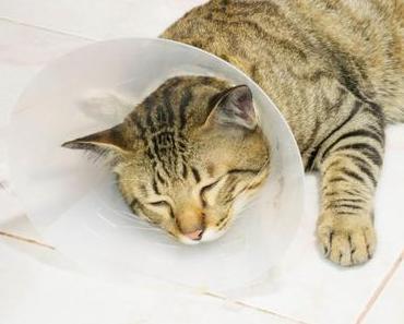 """Alternativen zur Halskrause für Katzen – So geht es ohne """"Plastiktrichter"""""""