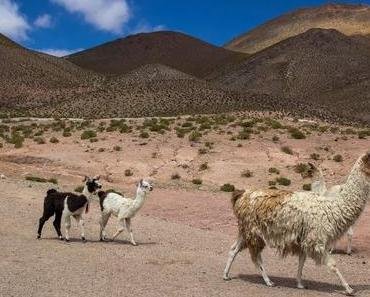 Atacama Wüste in Chile – 16 spannende Orte für dein Wüstenabenteuer
