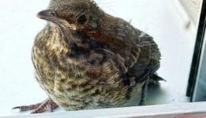 habe einen Vogel-Kind umgebracht