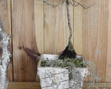 Der getrocknete Thymian-Stamm: natürliches Recycling! Skulptural und Dekorativ