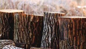 Abholzung Wälder Gründe, Folgen Lösungen
