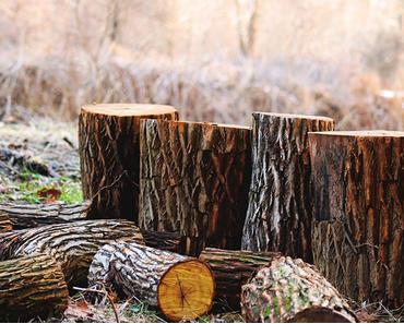 Abholzung der Wälder – Gründe, Folgen & Lösungen