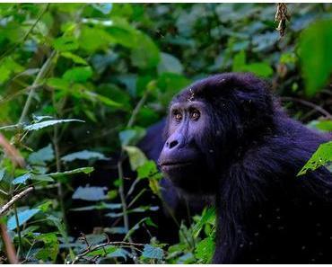 Artensterben – Definition, Ursachen, Folgen & Lösungen
