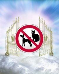 Für Hunde gibt es keinen Himmel?