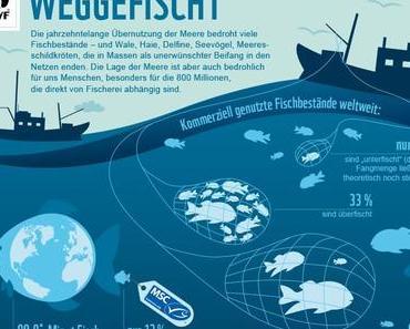 Überfischung der Meere – Fakten, Ursachen, Folgen & Lösungen