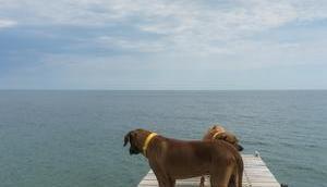 Fehmarn Tipps Hund, aber ohne Hundestrand