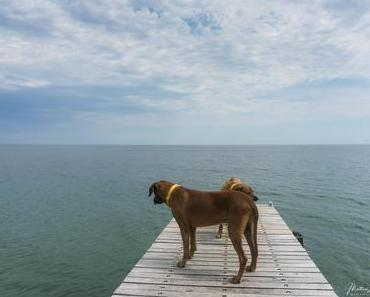 Fehmarn – 3 Tipps mit Hund, aber ohne Hundestrand