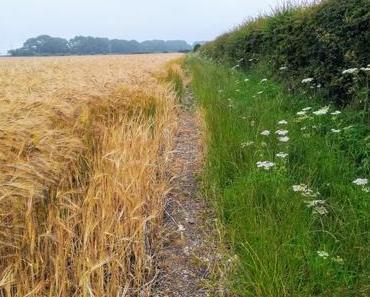 Endspurt auf dem Wolds Way: Von Ganton nach Filey (19.6 Kilometer)