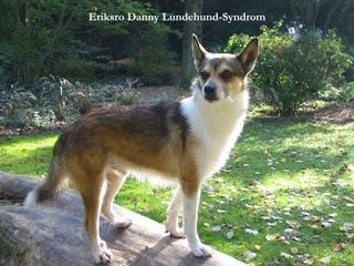 Zur Bedeutung der Gentests in der Hundezucht