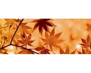 Tschüß Sommer – hallo Herbst!