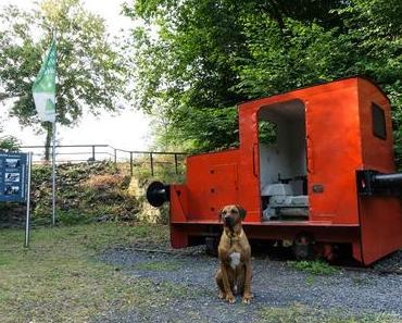 Der WesterwaldSteig auf vier Pfoten – Etappe 8