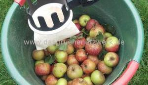 Apfel Blech Quark/Ölteig