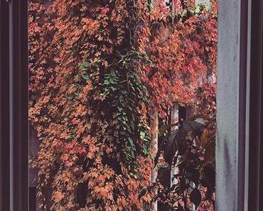 Awesome Autumn 🍂 | #berlinspiriert #berlin #blog #blogger #photography #nature #naturephotography #herbst #hinterhofromantik #oktober #colours #coloursofautumn #berlingram #igers #igersberlin #ig_berlin #ig_berlincity