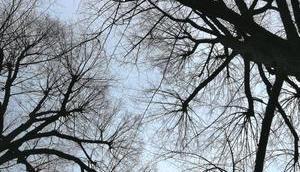 Foto: letzten Blätter sind gefallen
