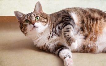 Deine Katze bettelt oder klaut Essen vom Tisch? Hier findest du Hilfe!