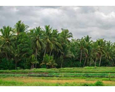 Ubud und Umgebung: Tipps für das Maxmimum an Urlaubsqualität
