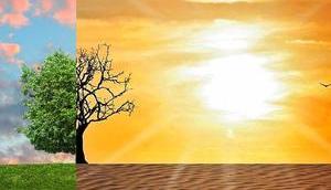 aller negativen Tweets Klimawandel Bots