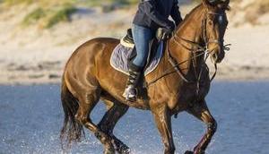 Sattelunterlage Welche richtige mein Pferd