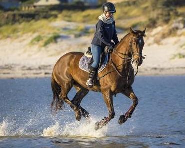 Sattelunterlage – Welche ist die richtige für mein Pferd
