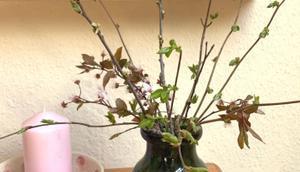 Friday-Flowerday oder Grünes Glück Zeiten Corona