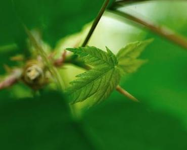 20 essbare Wildkräuter, die ihr im Frühling sammeln könnt