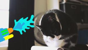 Katze Wasserpistole erziehen Eine gute Idee?