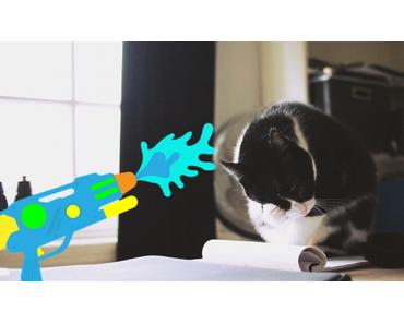 Katze mit der Wasserpistole erziehen – Eine gute Idee?