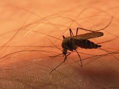Vitamin B gegen Mückenstiche