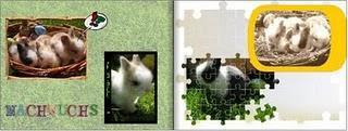 Albelli Fotobuchsoftware