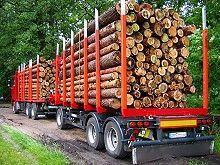 Bundesregierung verstärkt Kampf gegen illegalen Holzeinschlag und Waldzerstörung