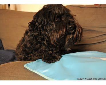 Sommerhund 1: Die Kühlmatte