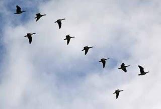 Die Vogelwelt von Välen in Göteborg