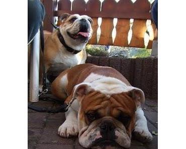 Hundezucht im VDH - Worte und Taten #4